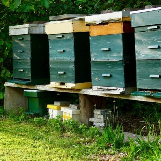 Robbing your bee hives